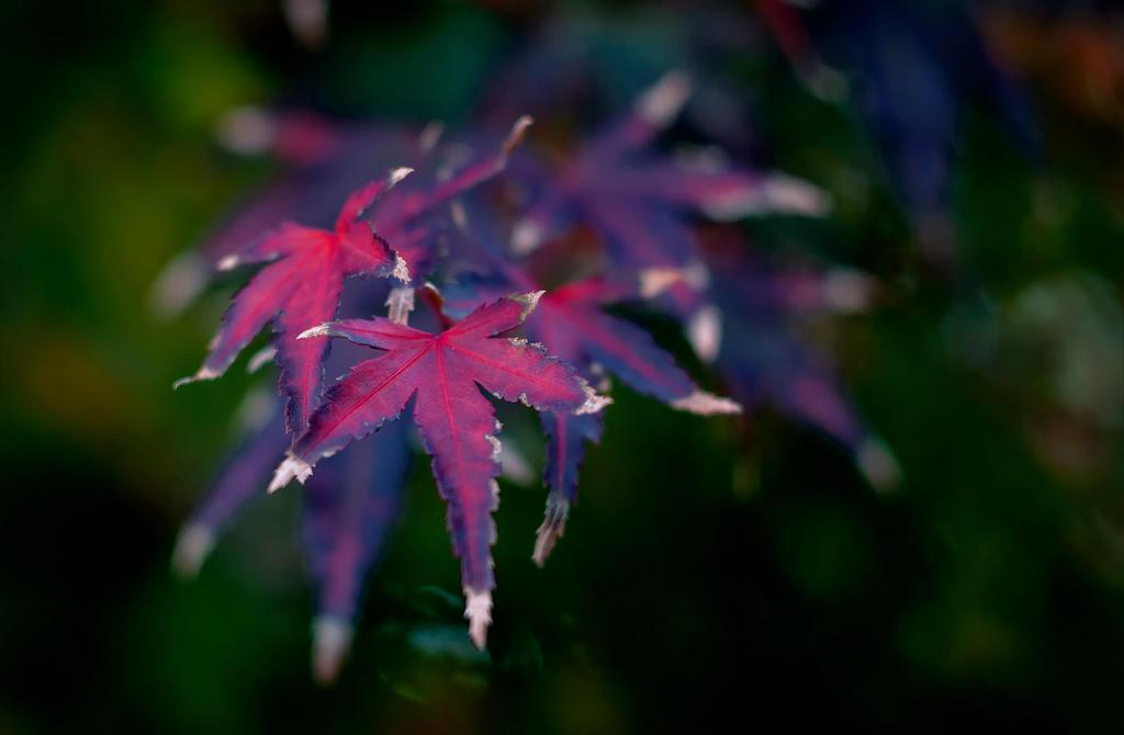 Color Splash by Jack-Nobre