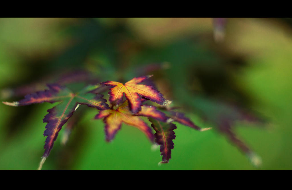 Color Splash II by Jack-Nobre