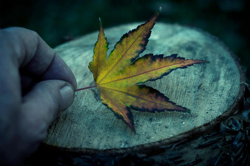Leaf by Jack-Nobre