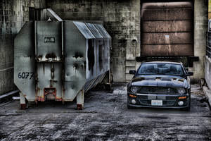 Shelby In HDR