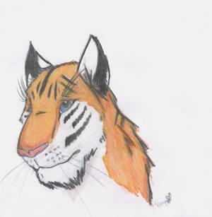 Tiger Practice