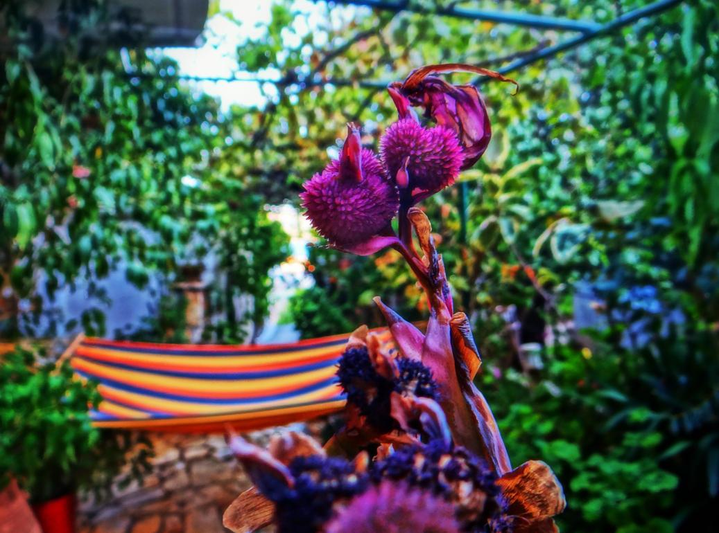 purple by BL00DYSunflowers