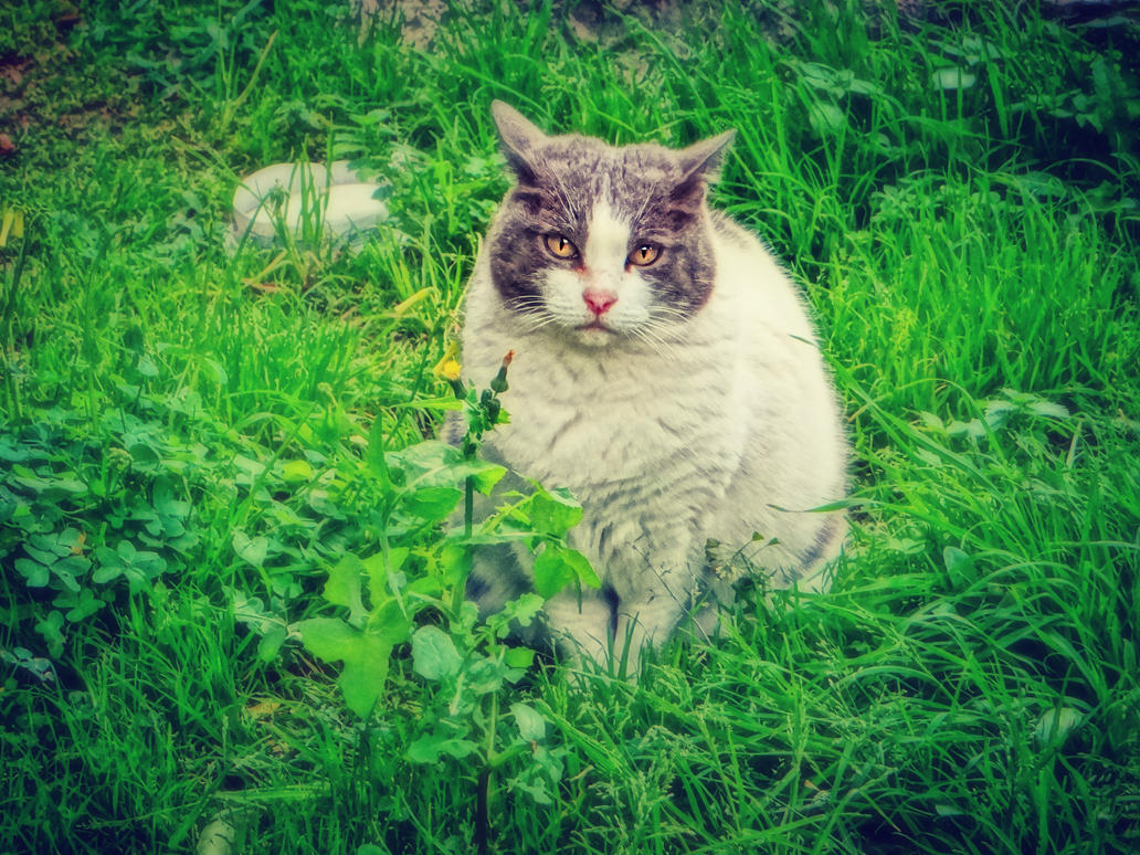 white and gray cat by BL00DYSunflowers
