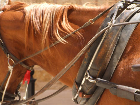 Mediterranean Horse