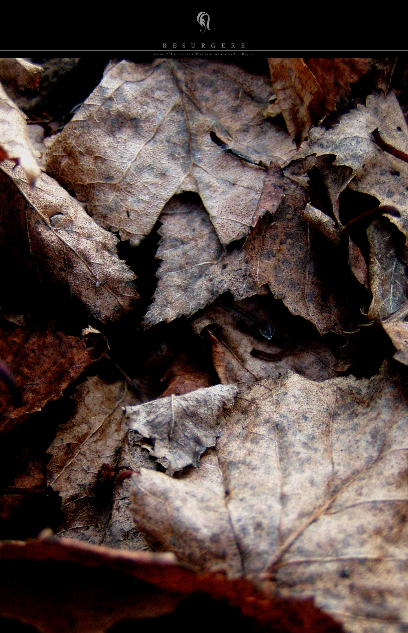 Photo - Leaf - 4859 by resurgere