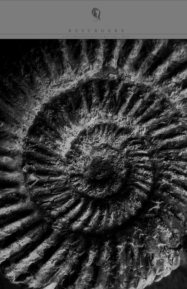 Photo - Fossil - 0330 by resurgere