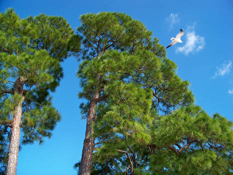 Trees in Anclote