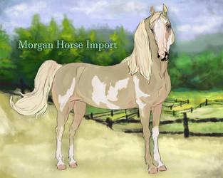 Atlantic - morgan stallion import #11 by Crockori