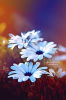Simply daisies by claudia-alexandra