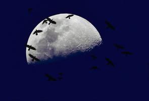 moonlighting by photofairy