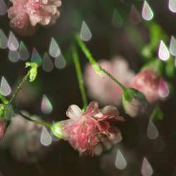 spring rain by photofairy