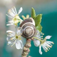 sea snail by photofairy