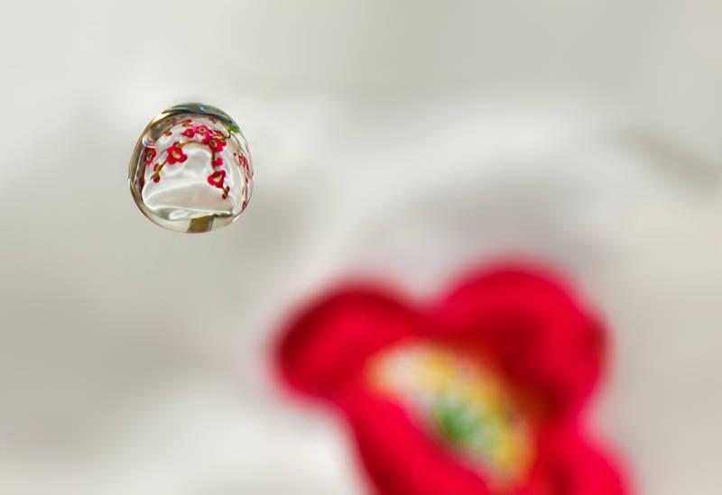 cherry blossom by photofairy