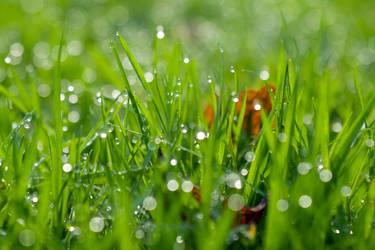 Autumn Grass by photofairy