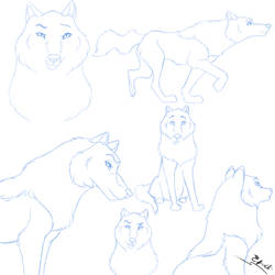Wolf Sketches by Efrodite