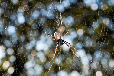 Arachnid by Learnt
