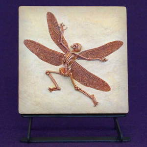 Nympha Cantio- Singing Fairy Fossil