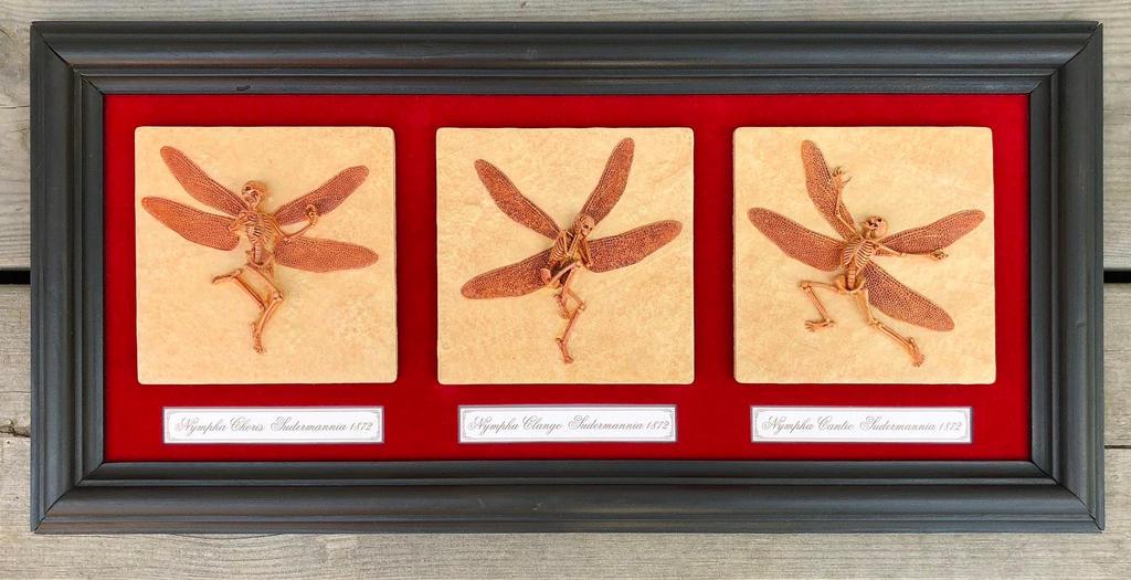 Framed Fairy Fossils by mattbag