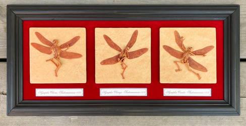 Framed Fairy Fossils