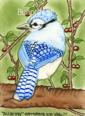 Blue Jay by 12Bunny