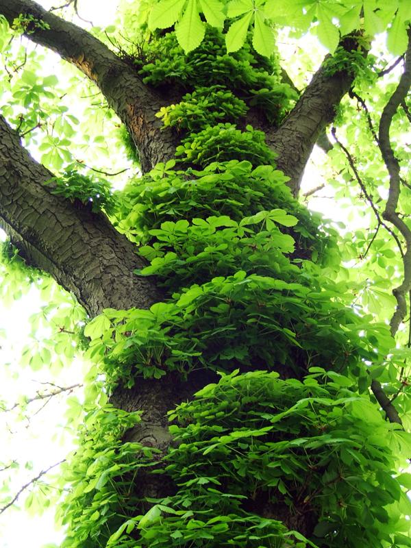 go green by Schreiberseele