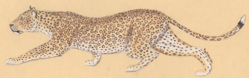 sneaky leopard by LionessFortune