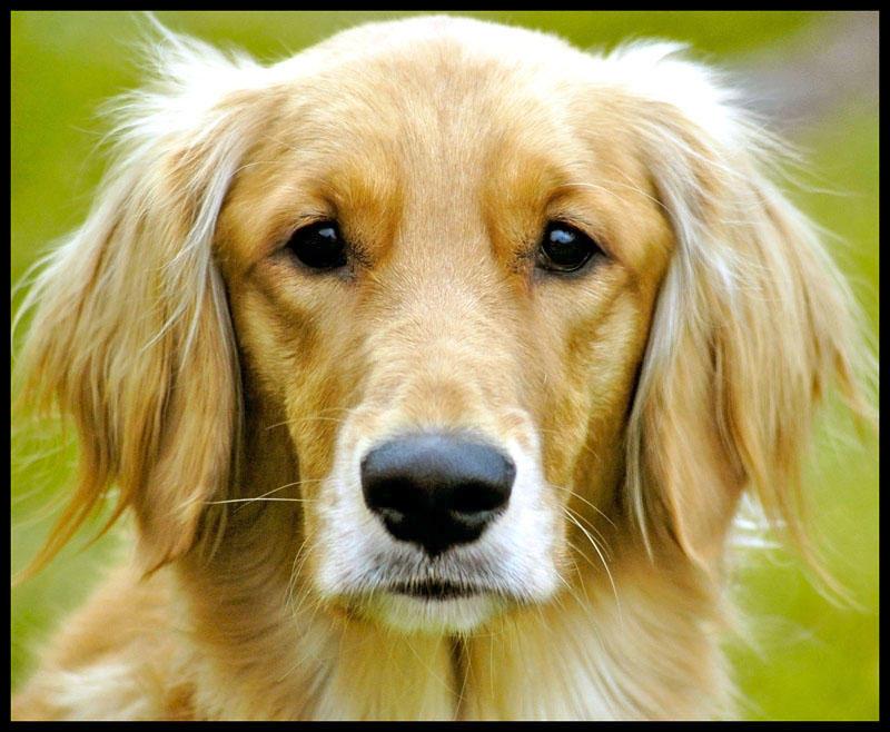 A Dog by mattglass