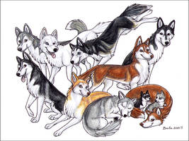The Siberian Husky by Bafa