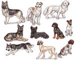 S - Dog Breeds -page 3-