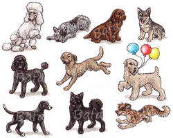 S - Dog Breeds -page 5- by Bafa