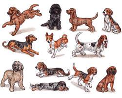 B - Dog Breeds -page 1- by Bafa
