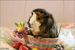 Easter Piggy