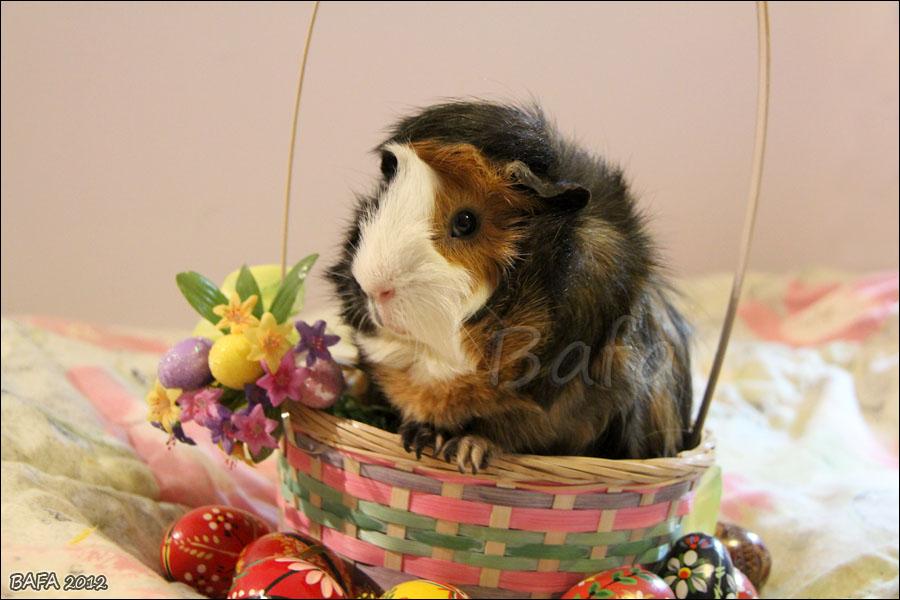 Easter Piggy by Bafa