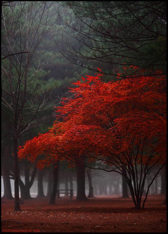 red tree by nayein