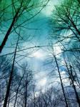 Acidic trees