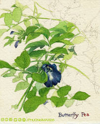 Butterfly pea by MAi-128