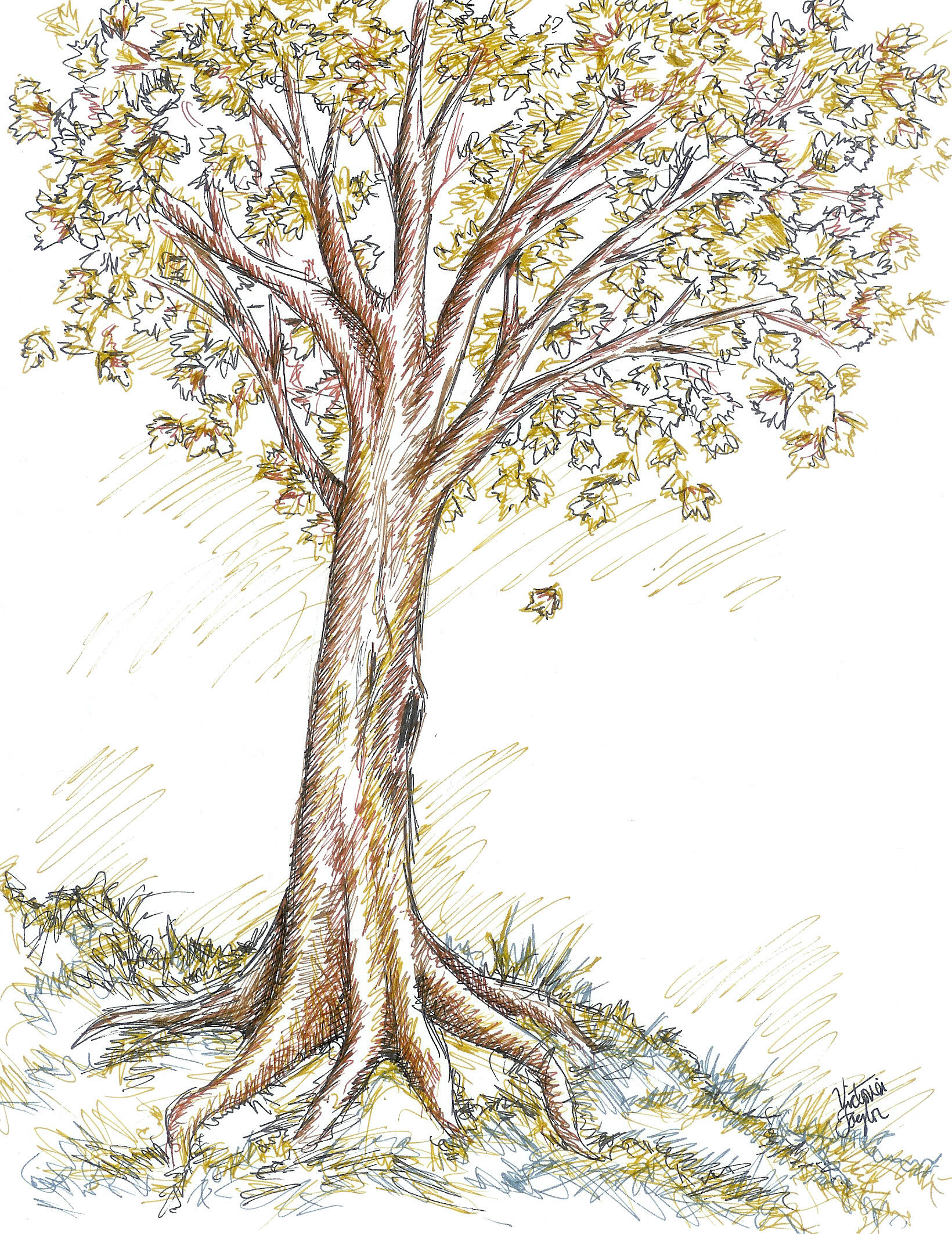 Drawing Of Fall Trees Drawing Of Fall Trees - Free Printable ... for Fall Tree Drawing  67qdu