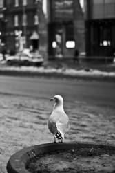 Black and White 8 by Mag1cMushroom