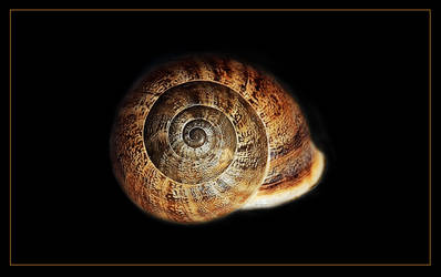 Shell by Nataly1st