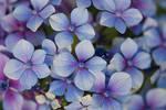Flower's texture Stock 1