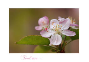 Tendresse by Nataly1st