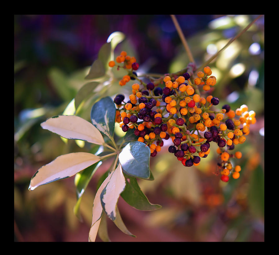 Jesen - Page 2 Autumn_touches_by_nataly1st-d2zpumk