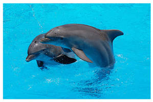 Smiling dolphins by Nataly1st