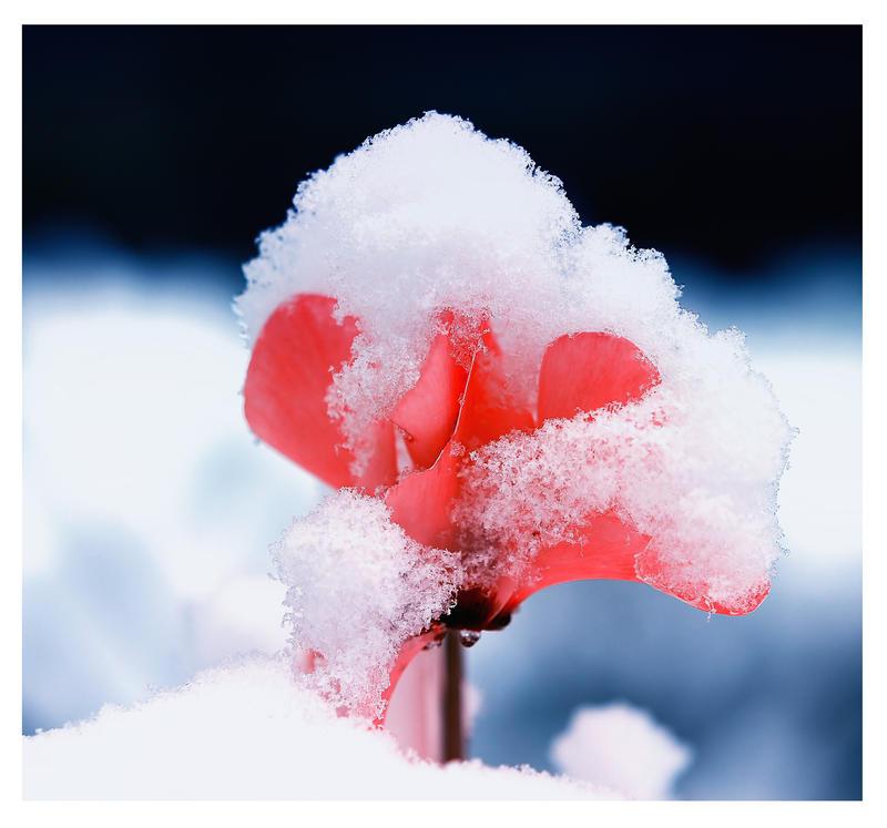 Frozen Beauty by Nataly1st