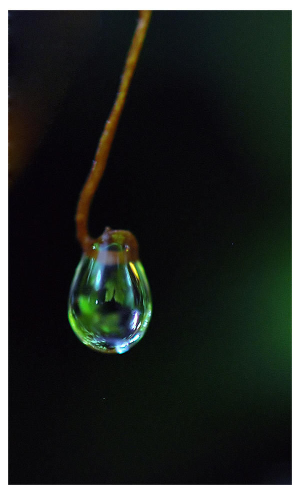 Big World in a little drop by Nataly1st