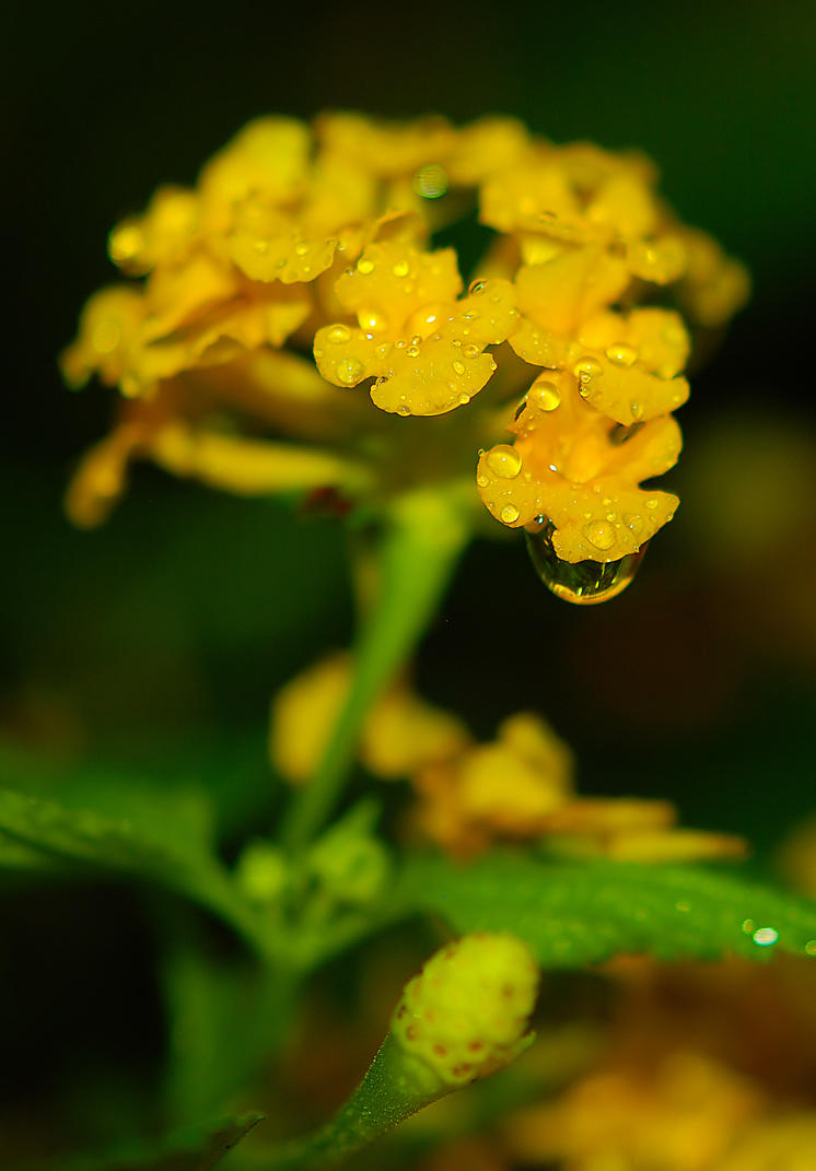 Yellow beauty by Nataly1st