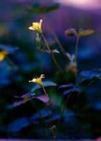 Midnight beauty by Nataly1st