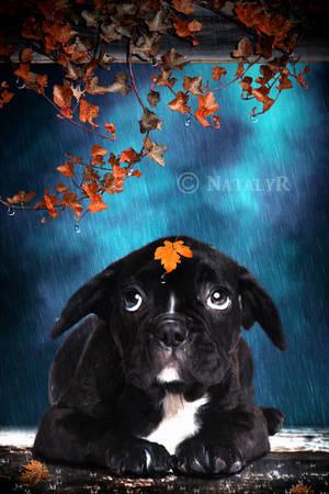 Rainy... by Nataly1st