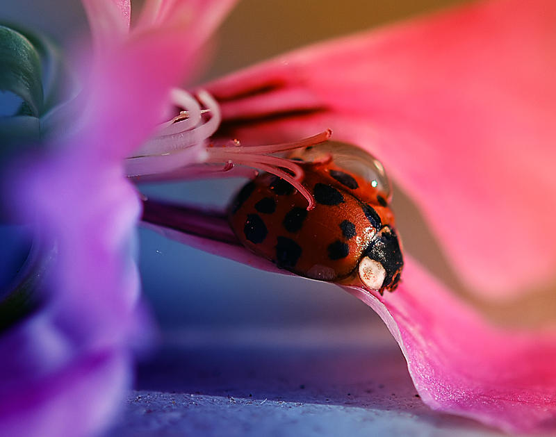 Cheerful ladybug by Nataly1st