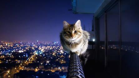 Cat Wallpaper 2